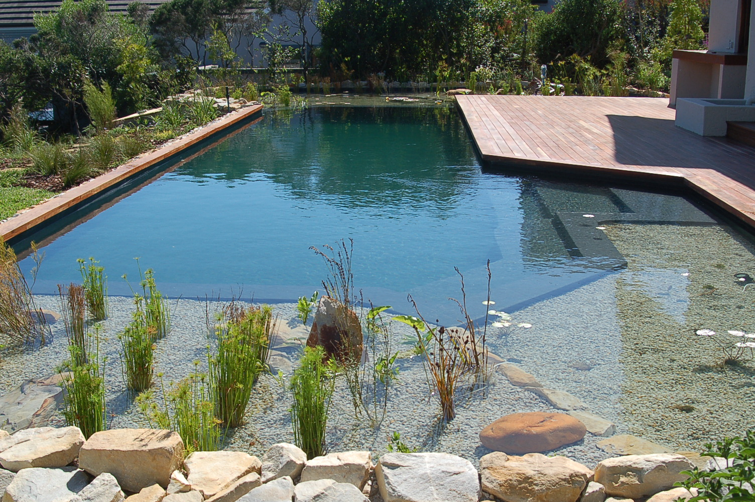 Island pools natural pools for Construction pool house piscine